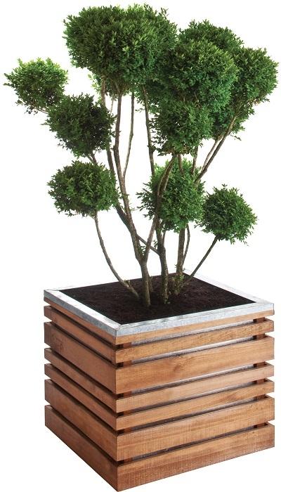 Lign z 60 avec plante